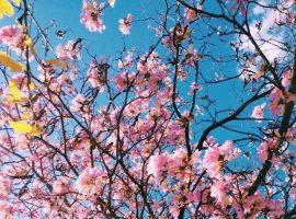 沖縄ウェディング12ヶ月カレンダー&季節別服装ガイド