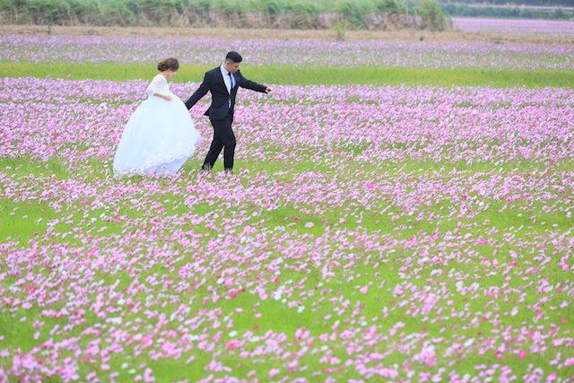 《1月》白ドレスがおすすめ♡コスモス畑でフォトウェディングを♡