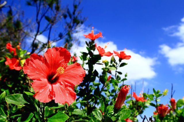 沖縄で食べたい南国フルーツ♪