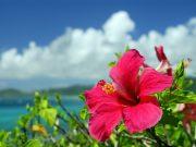 沖縄に新婚旅行に行くなら何する?ハネムーンらしい最高の思い出の作り方