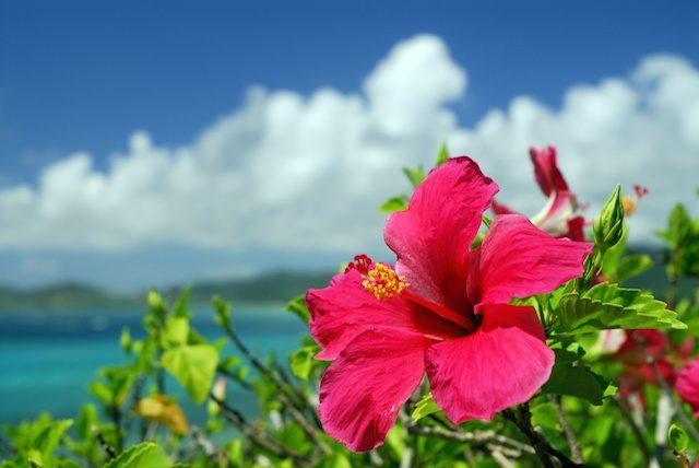 沖縄の言葉「かりゆし」って何?人々が持つ沖縄の心とは
