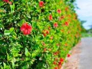 沖縄の新婚旅行のベストな時期は?目的ごとにおすすめ解説