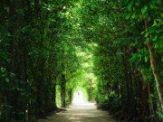 沖縄はフォトスポットの宝庫!まるで海外?ウェディングフォトの最新スポット特集5選~緑ver~
