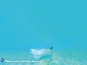 海の中のウェディングドレス!?海の中でウェディング撮影をしたい時に、オススメのウェディングドレスをご紹介!