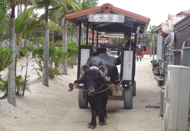 竹富島紀行:水牛に乗って移動