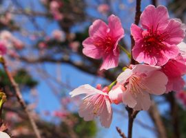スプリングウェディング♡春はもうすぐ!チャペル・ダイアモンドオーシャン